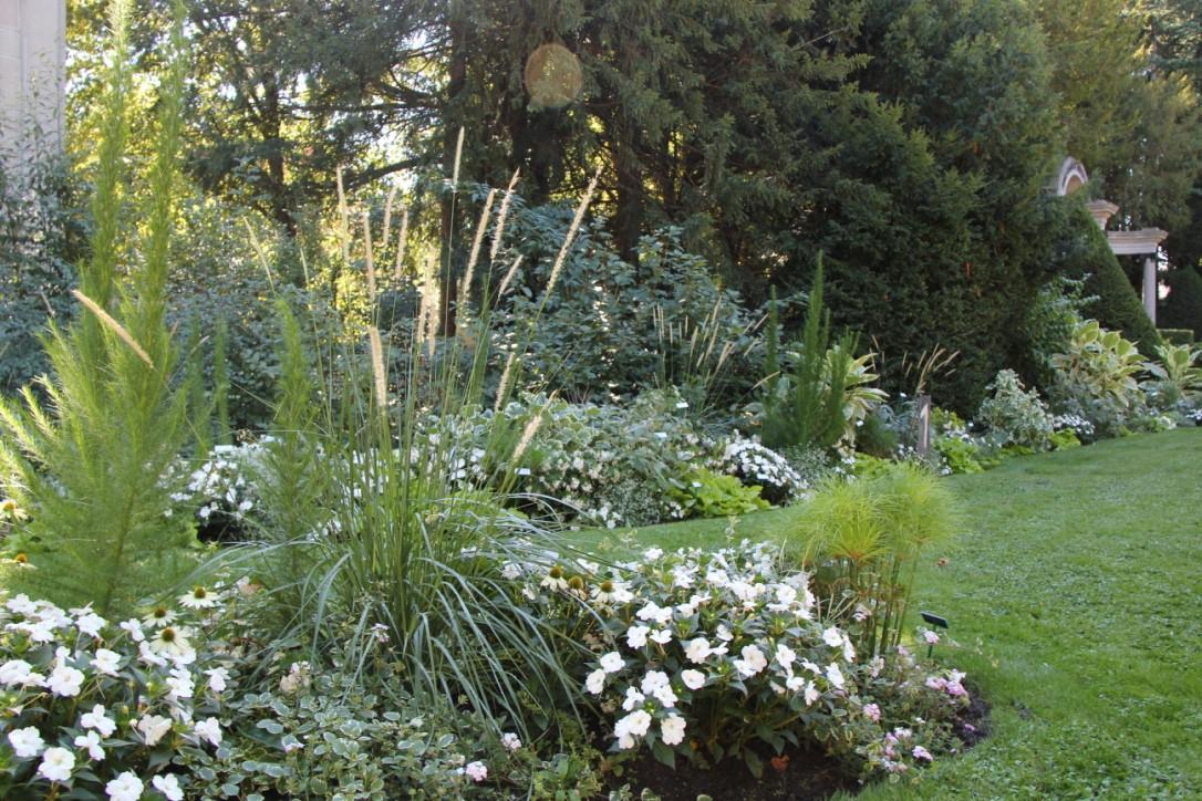 des plantes originales